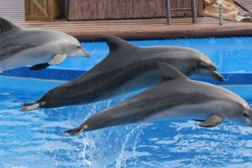 Nadar con delfines en Marmaris Turquia