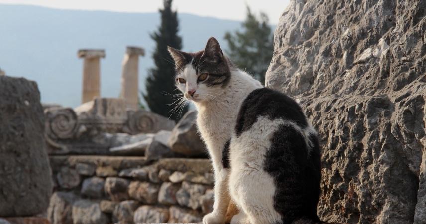 Un gato en efeso. Los gatos están en todas partes en Turquía, y son muy bien tratado. encantan los gatos, ¡así que diría que esta es otra gran razón para visitar Turquía!